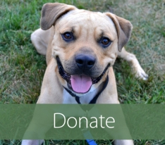 Donate+Box